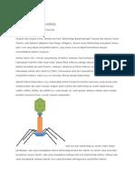 baktreriofag