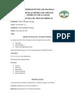 consulta MORFOLOGIA BACTERIANA.docx