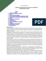 Cultivo y proceso agroindustrial de Zacate Limón