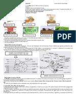 Producción y Monocultivo de Soja en América Latina y en Argentina