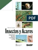 insectos y acaros