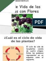 Ciclo de Vida de Las Plantas Sin Flores