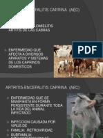 Encefalitis Artritis Caprina (Eac) 2014