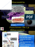 Enfermedades Mitocondriales Expo Finalllll