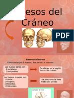 Huesos de l Crane Exposición