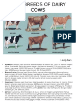 Main Breeds of Dairy Cows
