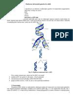 Realizarea_informatiei_genetice