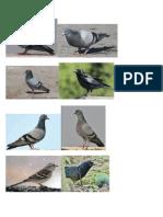 Bengali birds.docx