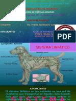 3° ANATO II-SISTEMA LINFATICO
