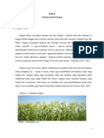 chapter 2 about sorghum
