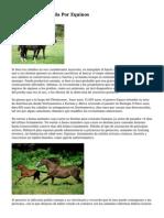 Psicoterapia Asistida Por Equinos