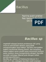 Bacillus Ppt