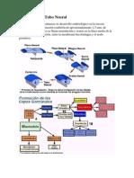 Desarrollo Del Tubo Neural