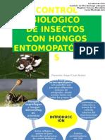Control Biologico de Insectos
