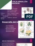 DESARROLLO DE A CABEZA Y LOS MAXILARES.pptx