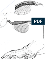 FELINOS-rostros comparados.pdf