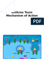Anthrax Toxin Mechanism of Actions