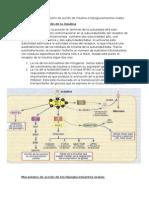 pregunta 2 Mecanismo de accion de la insulina e hipoglucemiantes.docx