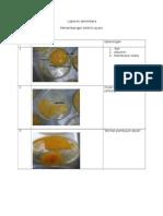 Lapsem Embrio Ayam