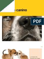 AV_24_Moquillo canino