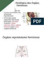 Anatomia Fisiológica Dos Órgãos Femininos