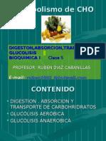 Digestion-Glucolisis.pdf