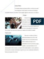 Animales en Peligro de Extincion en Mexico