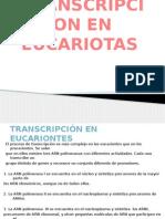 Regulacion de La Transcipcion en Eucariontes (2)