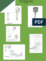 Plant Drawings by Shyam