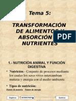 Transformación de alimentos y absorción de nutrientes