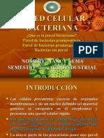 Pared Celular Bacteriana Nancy Lema