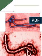 presentación sobre el ebola