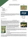 Saiga – Wikipédia, A Enciclopédia Livre