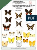 Mariposas Papilionidae & Peridae, Parque Deininger,El Salvador.C.A.