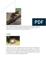 Animales en Exitincion