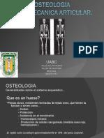 osteologia & articulaciones 1