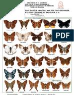 Mariposas Hesperiidae del parque Deininger de El Salvador.C.A