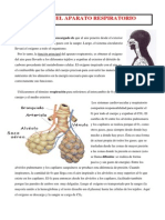 TEMA 6.- SISTEMA RESPIRATORIO.pdf