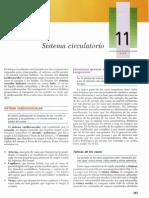 \Texto Atlas de Histologia, 2da Edición [11 Sistema Circulatorio]