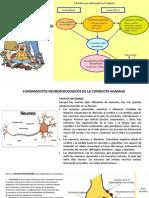 Fundamentos y Actitudes psicología