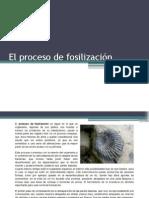 El Proceso de Fosilización