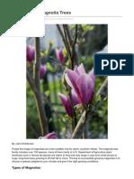 How to Grow Magnolia Trees