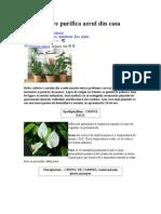 8 Plante Care Purifica Aerul Din Casa