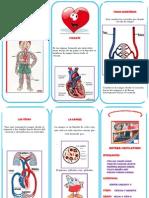 triptico .pdf