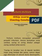 Trichuris Trichiura PPT