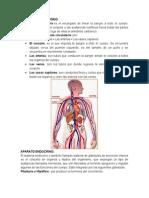 Aparato Circulatorio, Endocrino y Excretor