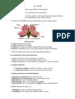 Organografia Vegetal