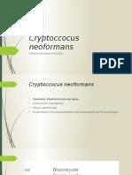 Criptoccocus neoformans