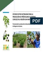 Estudio de Pre-factibilidad Para La Produccion de Pinon Blanco Jatropha Curcas en La Region San Martin Peru 2009