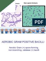Bacteriology Lec - Aerobic gram positive bacilli.ppt